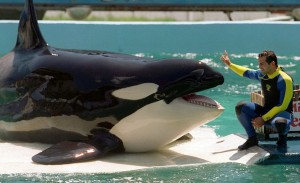 """Blackfish"" Documentary Fuels Overdue Discussion"