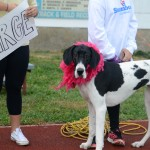 SophomoreRiley McCullough's dog, Ruby, waits patiently for the Dog Dash to begin. Photo by Allison Stockwell